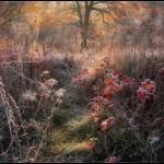 Kitsenko nebesnoe.info 04 150x150 Фотохудожник Александр Киценко. Великолепные фото природы.