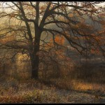 Kitsenko nebesnoe.info 08 150x150 Фотохудожник Александр Киценко. Великолепные фото природы.