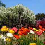 Asikaga nebesnoe.info 03 160x160 Viagens Japão Ashikaga Flower Park.