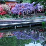 Asikaga nebesnoe.info 04 160x160 Viagens Japão Ashikaga Flower Park.