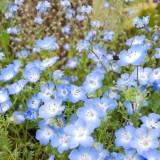 Asikaga nebesnoe.info 05 160x160 Путешествие по японскому Парку цветов Асикага.