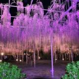 Asikaga nebesnoe.info 06 160x160 Viagens Japão Ashikaga Flower Park.