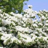 Asikaga nebesnoe.info 08 160x160 Путешествие по японскому Парку цветов Асикага.