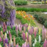 Asikaga nebesnoe.info 09 160x160 Путешествие по японскому Парку цветов Асикага.