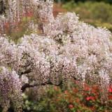 Asikaga nebesnoe.info 26 160x160 Путешествие по японскому Парку цветов Асикага.