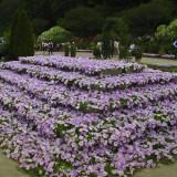 Asikaga nebesnoe.info 27 160x160 Viagens Japão Ashikaga Flower Park.
