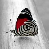 babochki nebesnoe.info 03 160x160 Бабочки