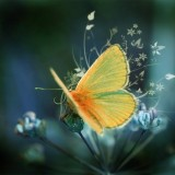 babochki nebesnoe.info 04 160x160 Бабочки