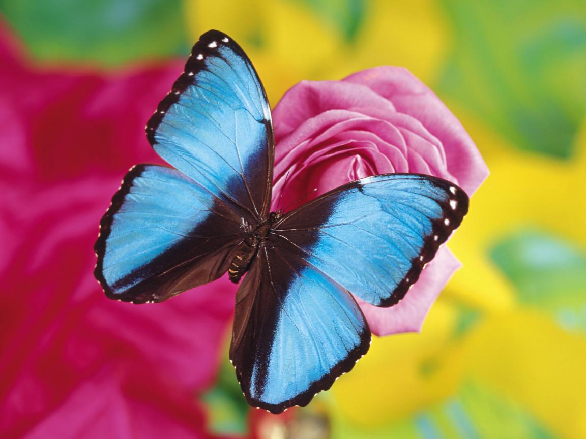 DataLife Engine Версия для печати Бабочки.