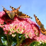 babochki nebesnoe.info 15 160x160 Бабочки