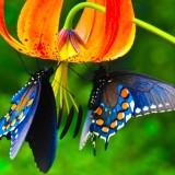 babochki nebesnoe.info 16 160x160 Бабочки