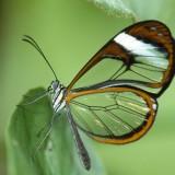 babochki nebesnoe.info 26 160x160 Бабочки