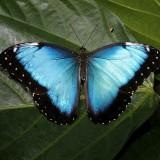 babochki nebesnoe.info 28 160x160 Бабочки