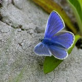babochki nebesnoe.info 29 160x160 Бабочки