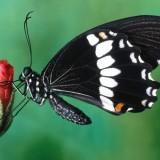 babochki nebesnoe.info 34 160x160 Бабочки