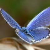 babochki nebesnoe.info 35 160x160 Бабочки