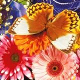 babochki nebesnoe.info 39 160x160 Бабочки