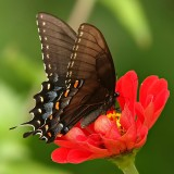 babochki nebesnoe.info 40 160x160 Бабочки