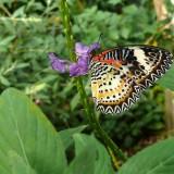 babochki nebesnoe.info 41 160x160 Бабочки