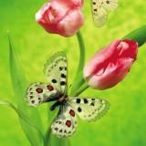 babochki nebesnoe.info 50 160x160 Бабочки