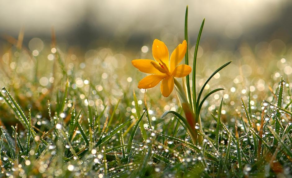 Солнышко и цветы картинки